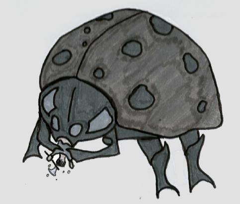 Coccihemoth